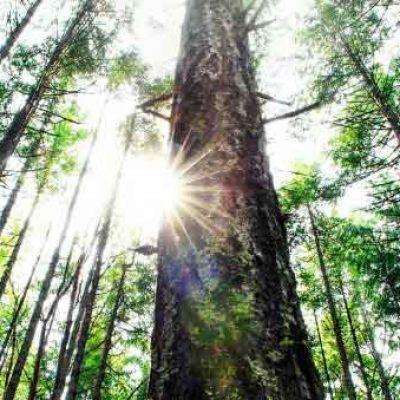 Una opción sostenible para cuidar el medio ambiente