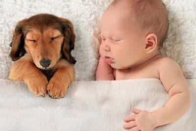 Bebé y mascotas en casa